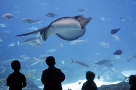 Careers: Aquarium Science